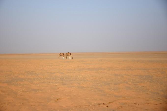 Desert_05