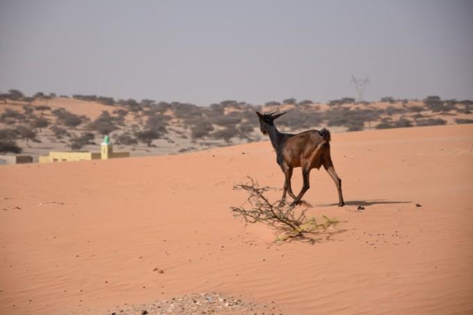 Desert_09