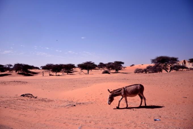 Desert_13bis